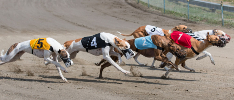 greyhound racing betting rules of 21