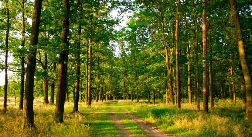 «Заблуждение зелёного леса». Почему так тяжело стать мастером ставок?